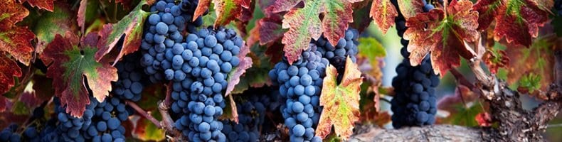 Vineyard | Kelowna Life Real Estate