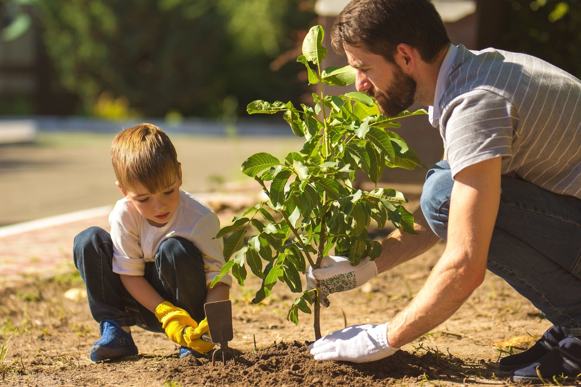 treeplanting-Help-your-Kelowna-home-show-better-and-sell-faster-Kelowna-Life-Real-Estate